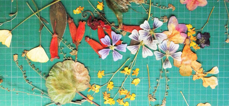 infusiones_con_flores