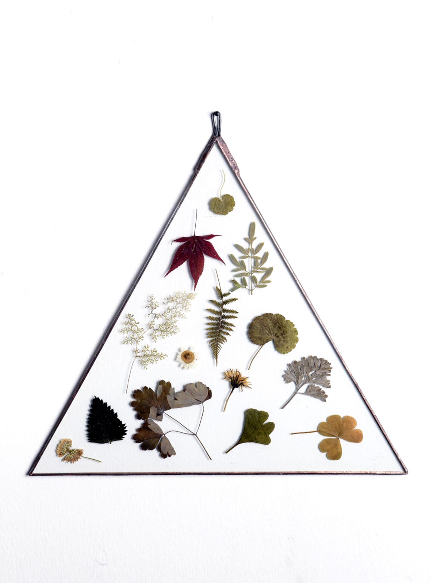 Herbario Vidrio Triángulo 34 cms