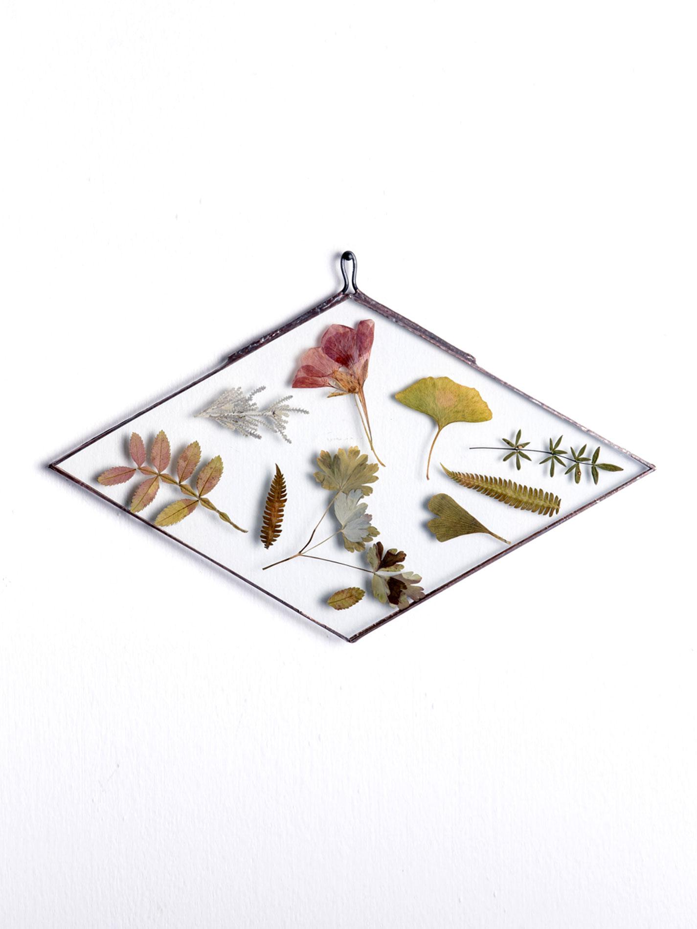 Herbario Vidrio Rombo 30 cms