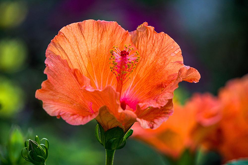 flores_medicinales